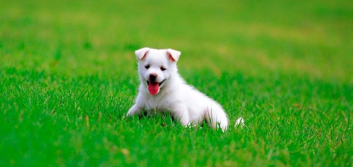 Perro en parque