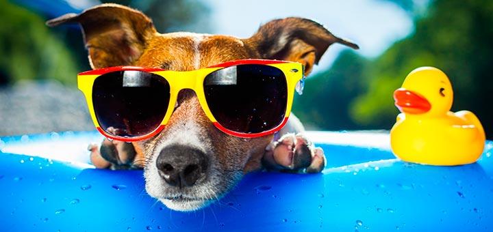 Vacaciones con perro en Málaga